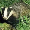Календарь охотника июнь 2015, охота, календарь охотника на июнь, охота в июне, охота на кабана, охота на оленя, охота на косулю, жизнь зверей в июне, жизнь птиц в июне