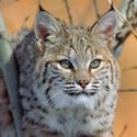 Календарь охотника на январь, календарь охотника январь 2018, охота в январе, открытие охоты в январе, закрытие охоты в январе, охота на кабана в январе, на кого охотиться в январе, календарь охотника на январь 2018, охотничий календарь на январь