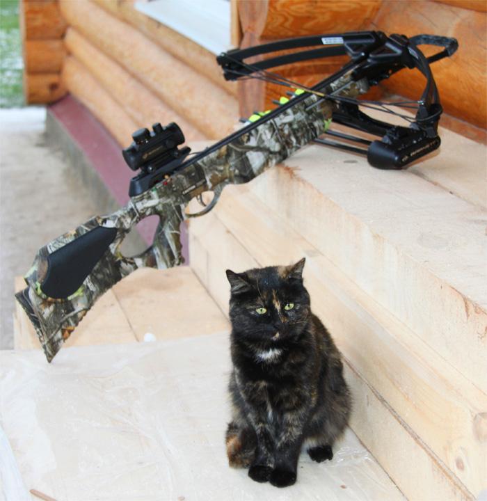 Стрельба из лука, охота с луком, охота с арбалетом, охота с блочным луком, блочный лук охота, Фото Андрей Шалыгин