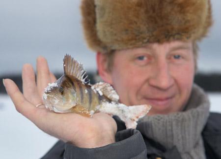 зимняя ловля окуня на блесну с цепочкой