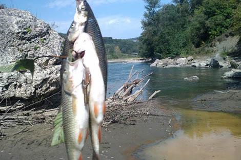 ловить на реке белая