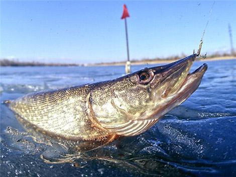 рыбалка на молве видео