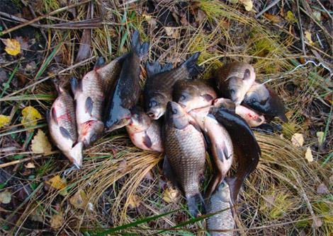 красная зорька платная рыбалка