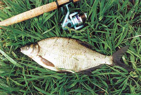 на что ловить рыбу летом