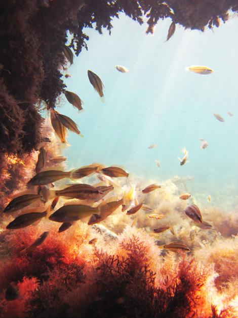 Нож для подводной охоты, водолазный нож, подводная охота, подводный нож, нож для дайвинга, как выбрать нож для подводной охоты, обзор ножей для подводной охоты, титановые ножи для подводной охоты, как выбрать подводный нож, требования к ножам