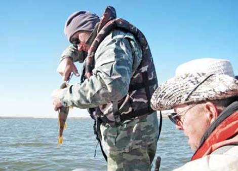 ловля хищника на цимлянском водохранилище