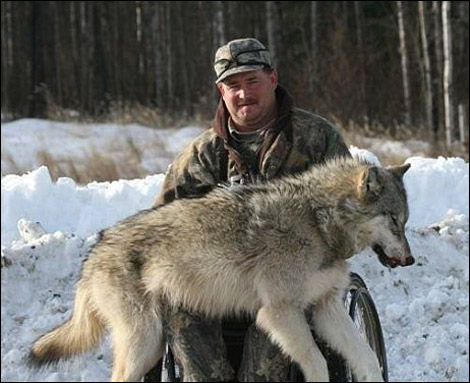hunting and wolves essay