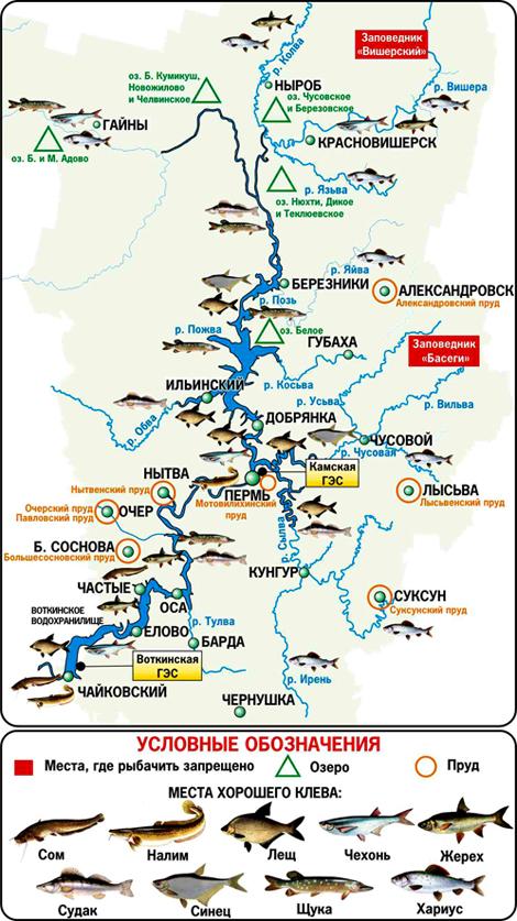 где в московской области ловить налима