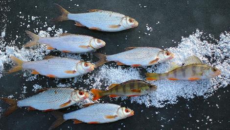 жидкие прикормки для рыбалки состав