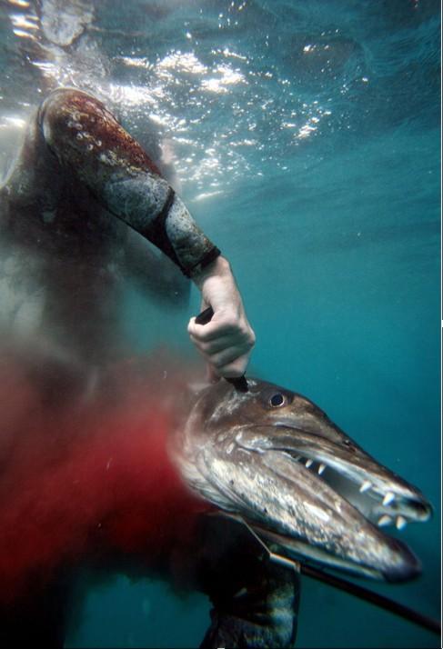 podvodnaya-ohota