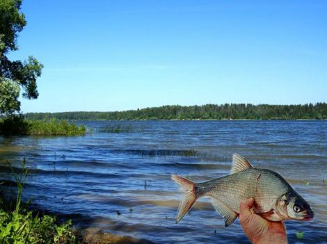 где в истре клюет рыба