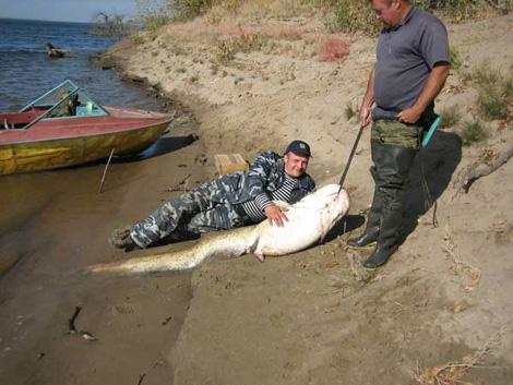 как поймать медведку для сомовьей рыбалки видео