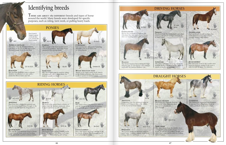 тоже жаждет породы лошадей фото с названиями по алфавиту жену друга Только