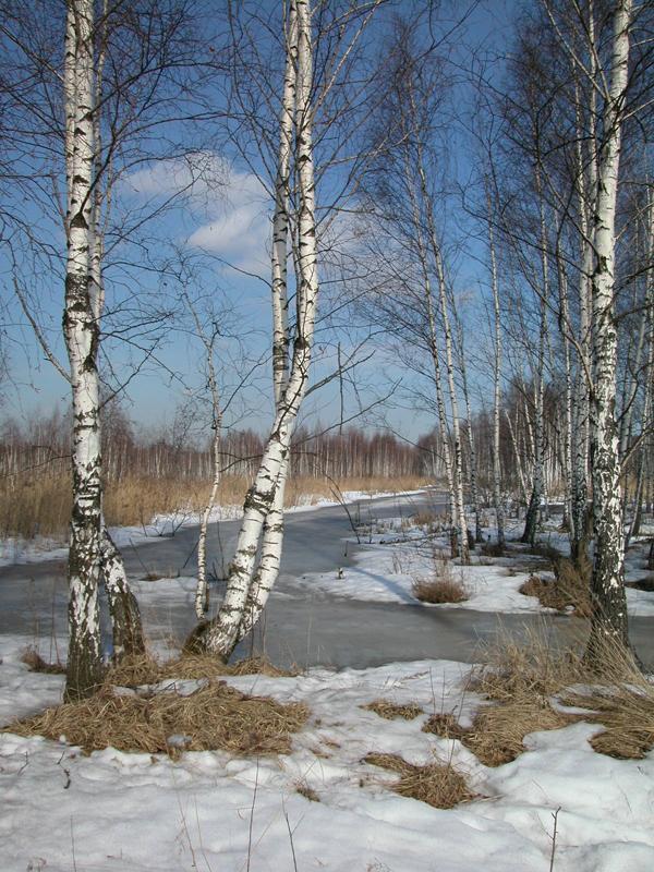 Национальный парк Лосиный остров (фото В. Солодушкина) .