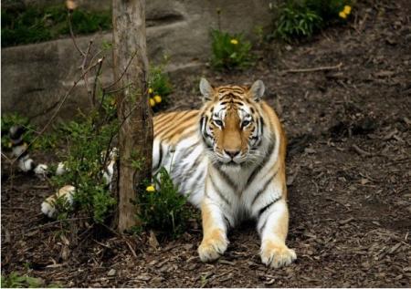 родился в год тигра под знаком близнецы