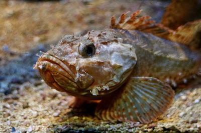 На Азовском море - массовый мор рыбы.