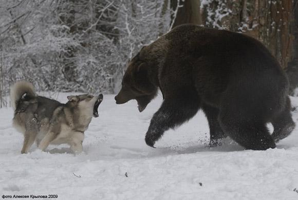 Унты Сибирские