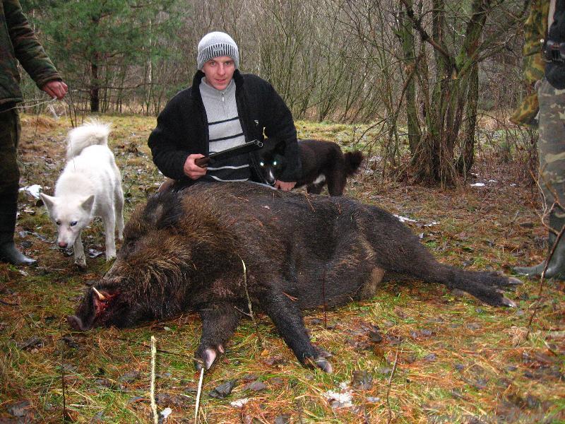 b Охота/b. b охота на кабана/b.  Сайт об охоте.