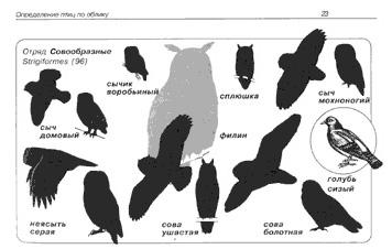 """Образцы разворота книги  """"Птицы средней полосы: Карманный определитель """""""