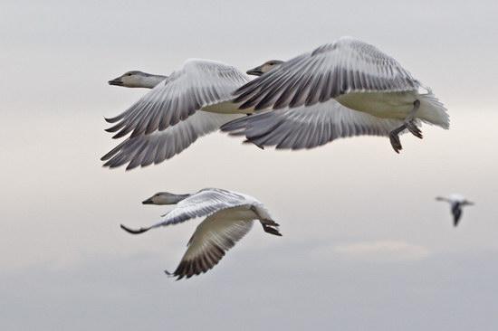смотрите и еще всё о птицах ласточках или птицы & фото.  Птица по алфавиту.