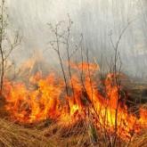 Информация по лесным пожарам по состоянию на 9 августа