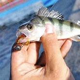 Видео об ультралайте - Я увлечен рыбалкой