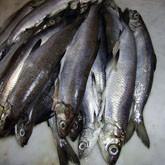 14 02 2013 зимняя рыбалка мастер класс по