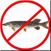 Перечень рыболовных угодий в которых запрещается