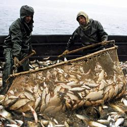 На Среднем Урале разрешили охоту на лосей...