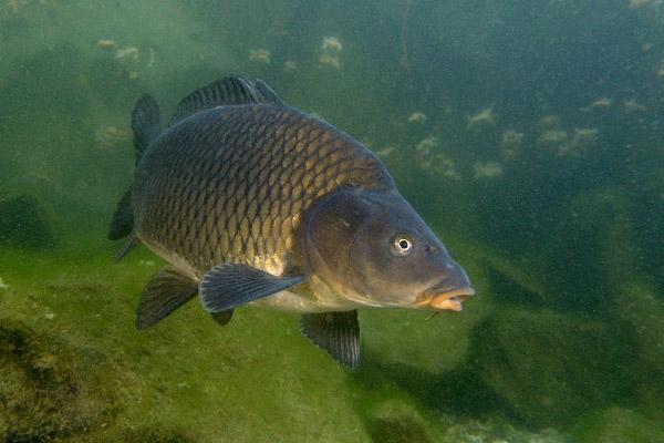 озеро багаряк свердловская область рыбалка
