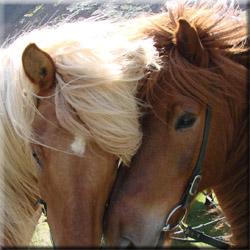 отдых с детьми, лошади, экскурсии