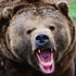 охота на медведя в Тверской области