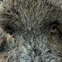 Охота на кабана, оленя и косулю в Севастополе